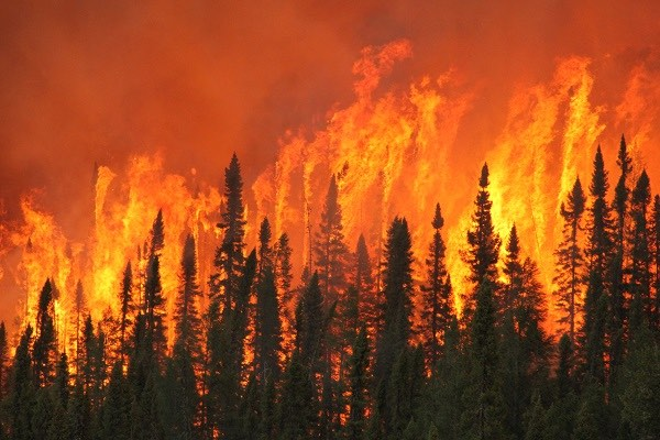 About 9,100 forest fires occur annually in Canada